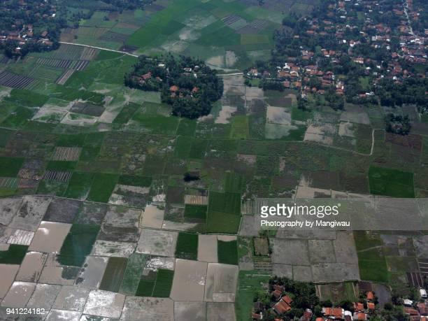Banten Rice Paddies