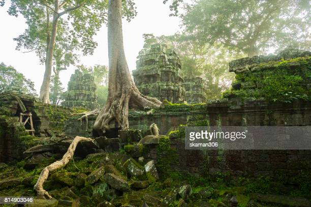 banyan tree root covering stone prasat  ta prohm in angkor thom,angkor wat  siem reap, - old ruin stock pictures, royalty-free photos & images