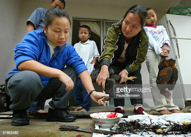 Bao Lee helps her sister Va Vang kill chickens in the back yard of the Vang home for a special Hmong New Year feast on December 12 2004 in Fresno...