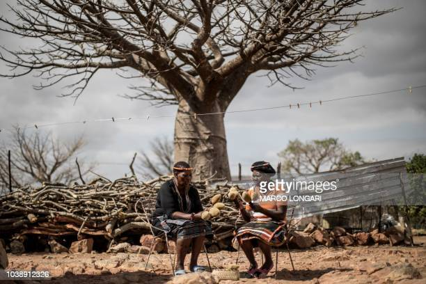Baobab fruits harvesters Annah Muvhali and Cristina Ndou hold baobab fruits they harvested in the village of Muswodi Dipeni in the Limpopo Province...