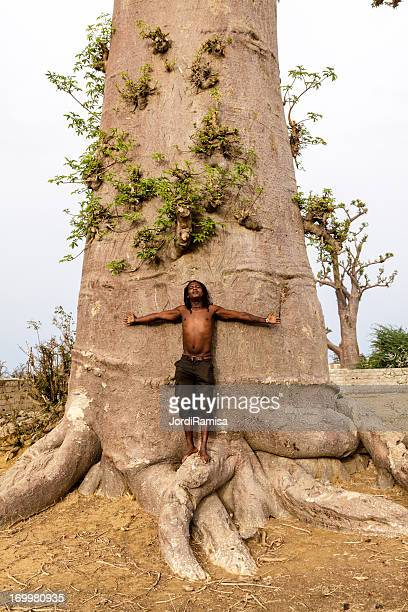 baobab - senegal fotografías e imágenes de stock