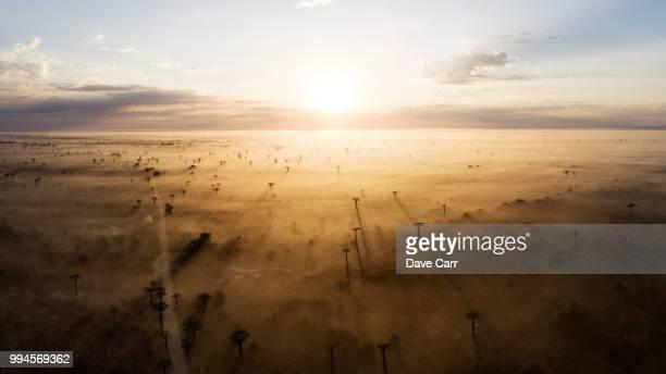 baobab sunrise - drohnenperspektive stock-fotos und bilder