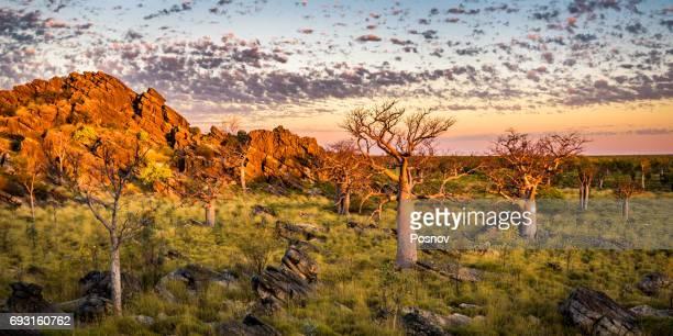 Baobab trees at Oscar Range
