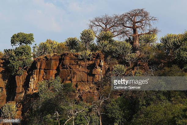 Baobab trees grow on a cliff top at the Mashatu game reserve on July 26 2010 in Mapungubwe Botswana Mashatu is a 46000 hectare reserve located in...