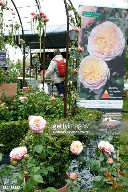 Baptism of the Rose 'Domaine de Chantilly' selected by Prince Amyn Aga Khan and created by Georges Delbard during the Days of Plants 2017 at Chateau...