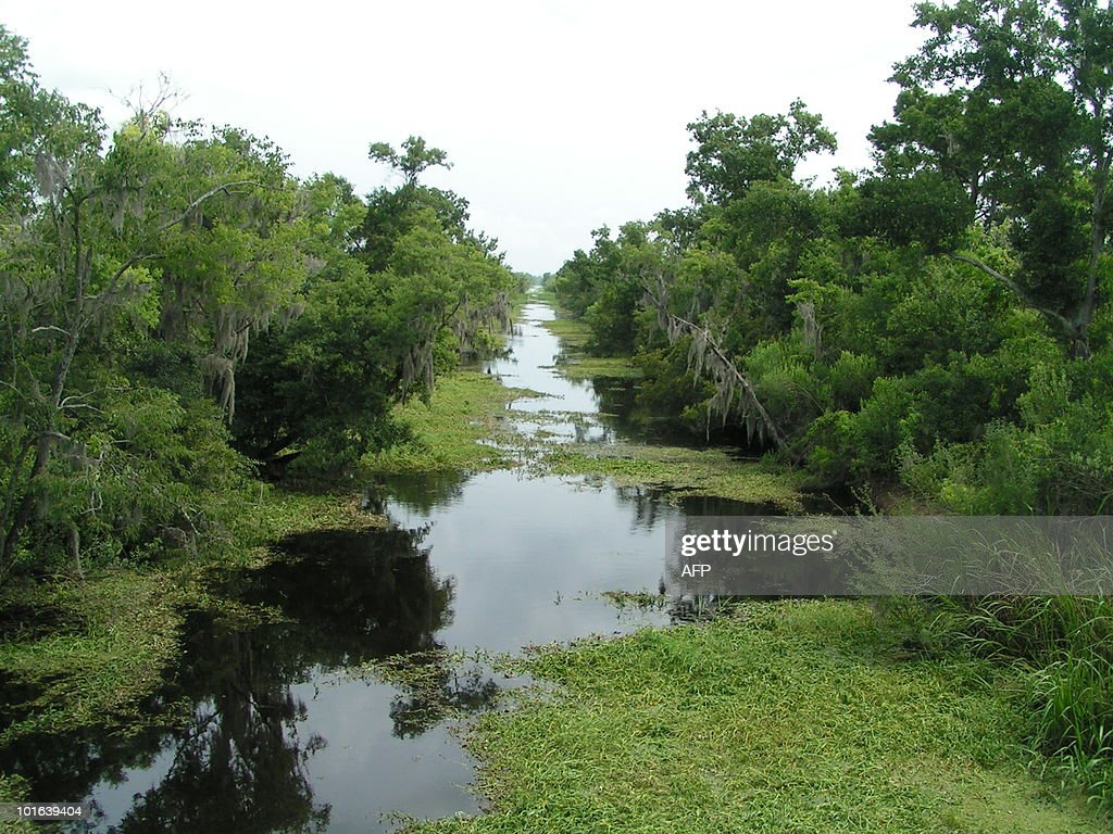Barataria Preserve, a natural park just 15 miles from New Orleans, is pictured on June 5, 2010. Marshlands protect New Orleans from sea surges but are threatened by the oil slick in the gulf of Mexico. US President Barack Obama promised June 5 to use 'every resource' of his government to help residents of the Gulf of Mexico coast recover from the worst environmental disaster in US history caused by the giant oil spill. AFP PHOTO / Patrick BAERT