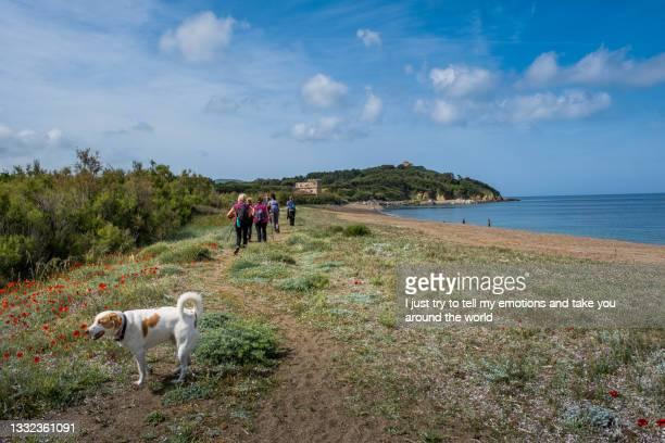 baratti, rimigliano beach - leghorn, tuscany, italy - pastore maremmano foto e immagini stock