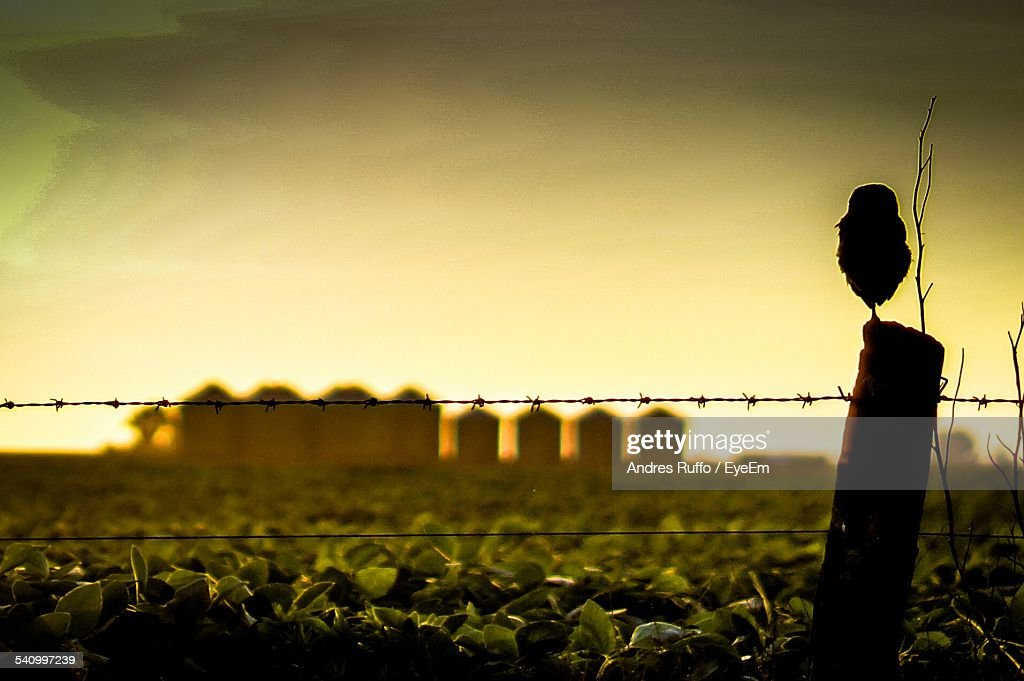 Barb Wire On Agricultural Field Against Sky During Sunset : Stock Photo