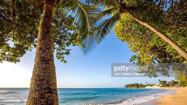 barbados, beach on the atlantic ocean - bridgetown barbados stock pictures, royalty-free photos & images