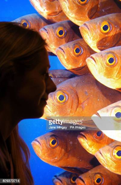 Barbara Karen Evans from South Africa looks at her highly commended image entitled 'School of crescenttail bigeyes' in the catorgory 'The Underwater...