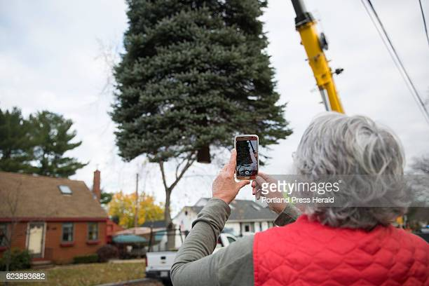 Barbara Ripley takes a video as crews remove the 40 foot blue spruce tree from her front yard on Harris Avenue. The Ripley's planted the tree 29...