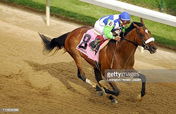 Barbaro Stock Photos And Pictures