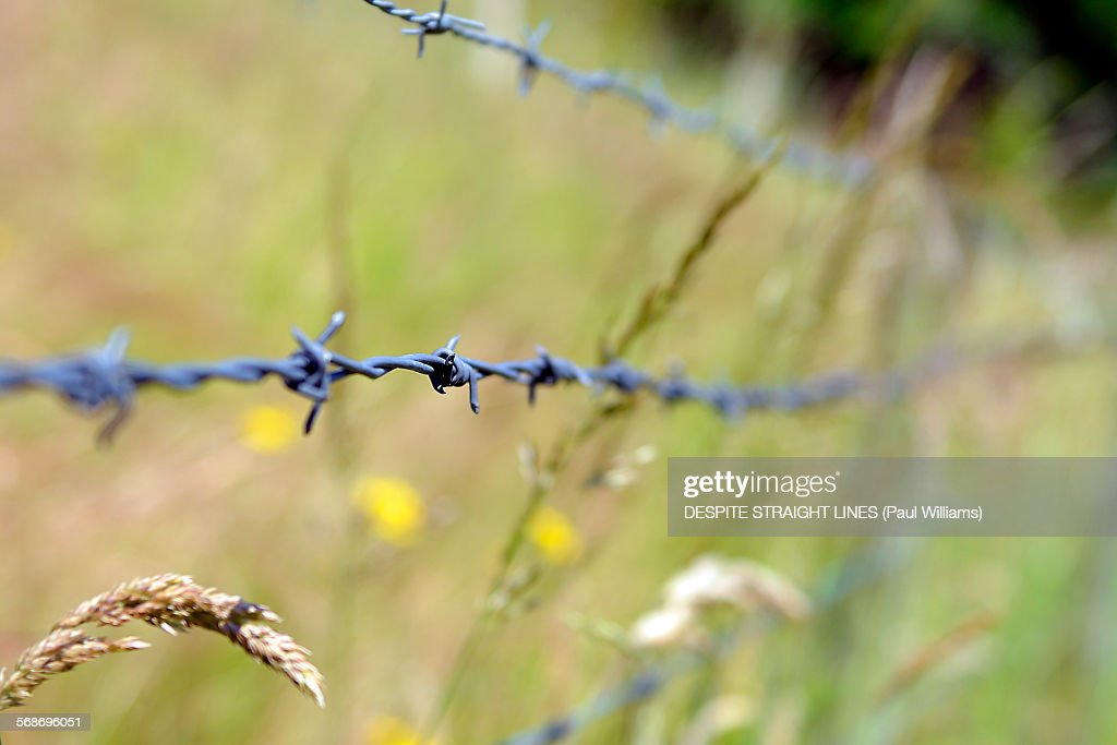 Barbed : Stock Photo