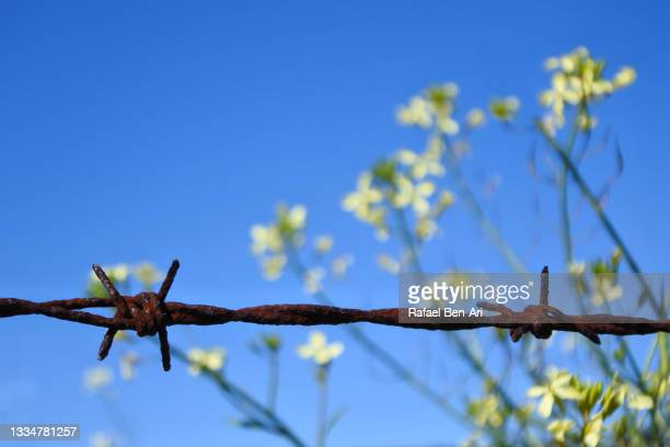 barbed wire fence against blossoming wild flowers and blue sky - rafael ben ari fotografías e imágenes de stock
