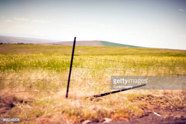 Barbed wire fence along field