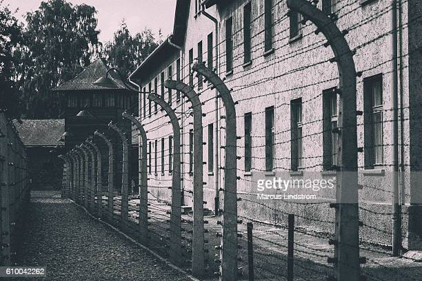 barbed wire fence at auschwitz - concentration camp stock photos and pictures