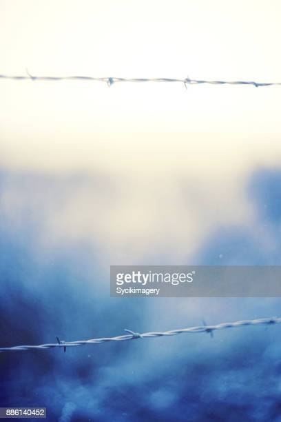 Barbed wire fence, cold temperature