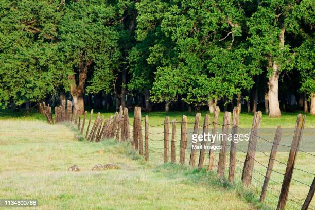 Barbed Wire Fence in Disrepair Separating Fields