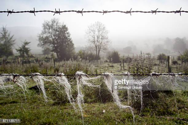 barbed wire fence - estadio reyno de navarra stock pictures, royalty-free photos & images