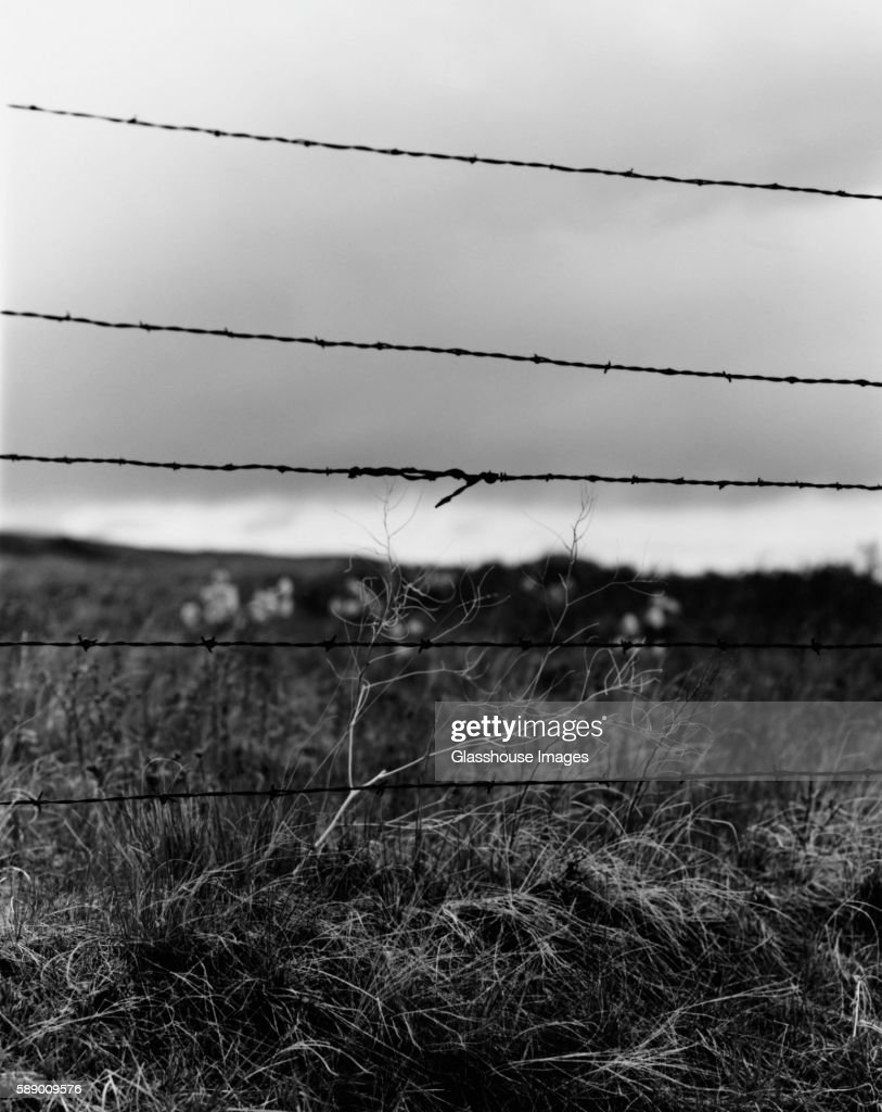 Barbed Wire Fence Stock Photo | Getty Images