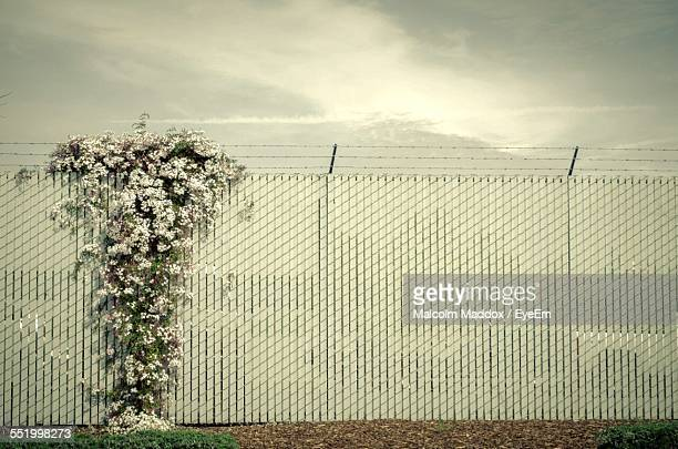 Barbed Wire Fence With White Flowers