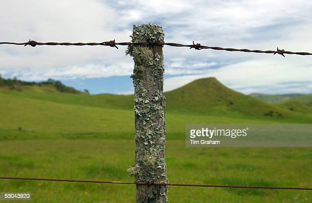 Barbed wire on post covered with moss and lichens North Island New Zealand
