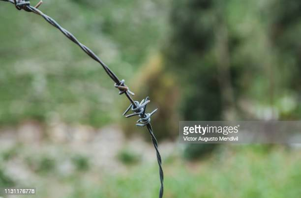 barbed wire - protección stock pictures, royalty-free photos & images