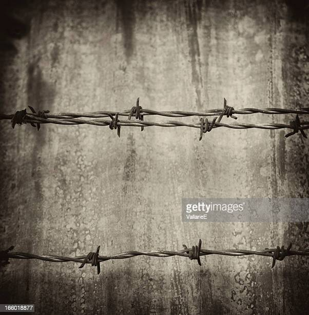 barbed wire - free walpaper stock photos and pictures