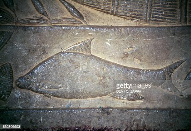 Barbus bynni relief of the Mastaba of Mereruka 2340 BC Necropolis of Saqqara Memphis Egypt Egyptian civilisation Old Kingdom Dynasty VI