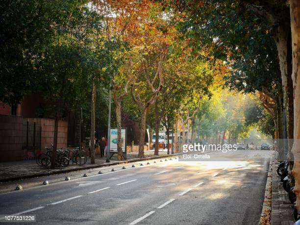 barcelona street at autumn - barcelona espanha imagens e fotografias de stock
