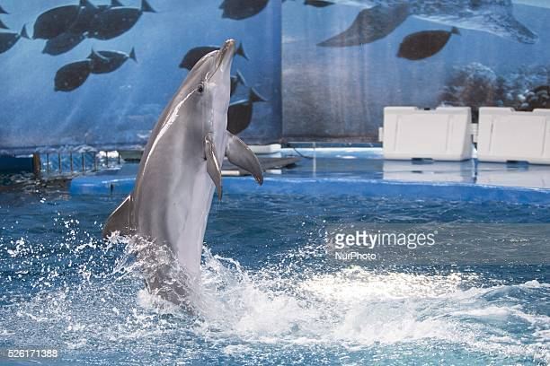 Barcelona Zoo Dolphins during his show