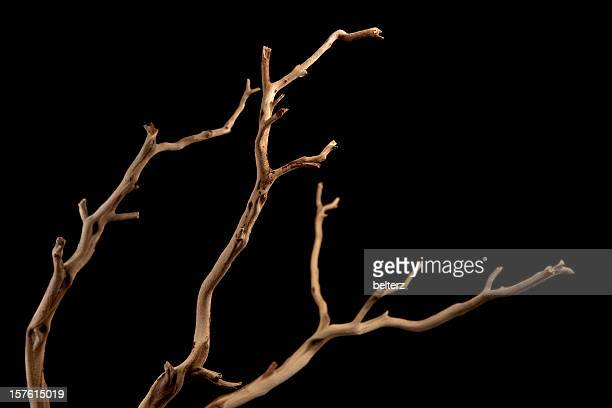 a bare brown branch, silhouetted on a black background  - twijg stockfoto's en -beelden