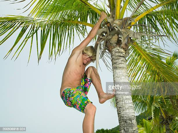 bare chested young man climbing palm tree - chest barechested bare chested fotografías e imágenes de stock