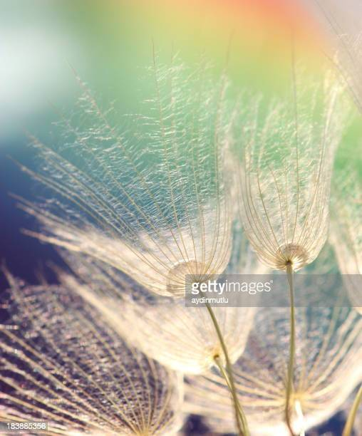Bare dandelions photographed from below against colored sky