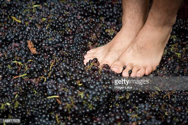Bare feet crushing grapes at Madeira Wine Festival.