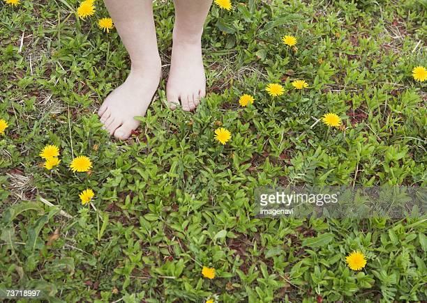 bare feet in the frower field - feuille de pissenlit photos et images de collection