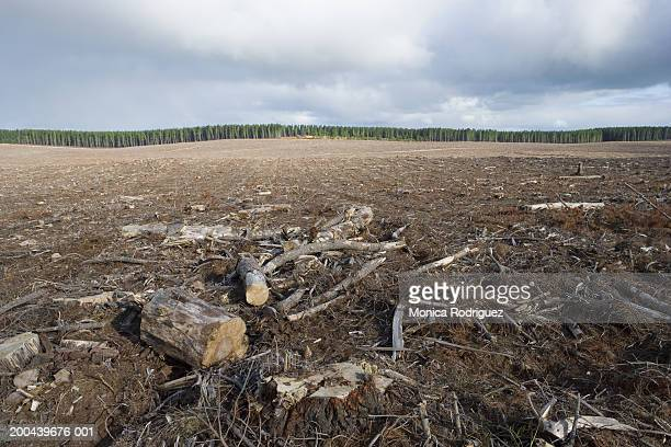 bare logging forest, australia - deforestation stock pictures, royalty-free photos & images