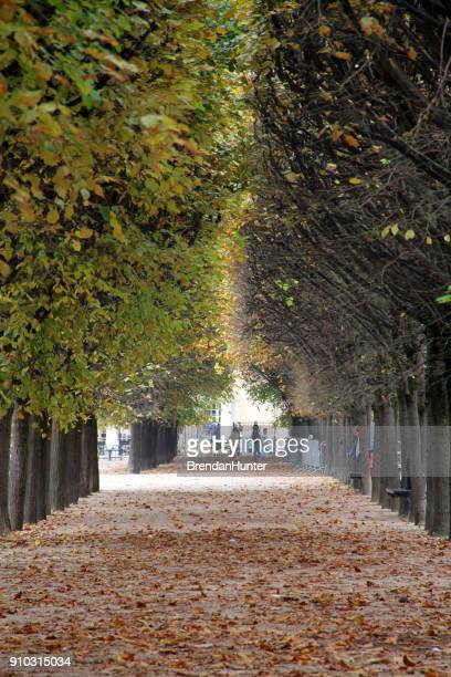 bare side - palais royal stock pictures, royalty-free photos & images