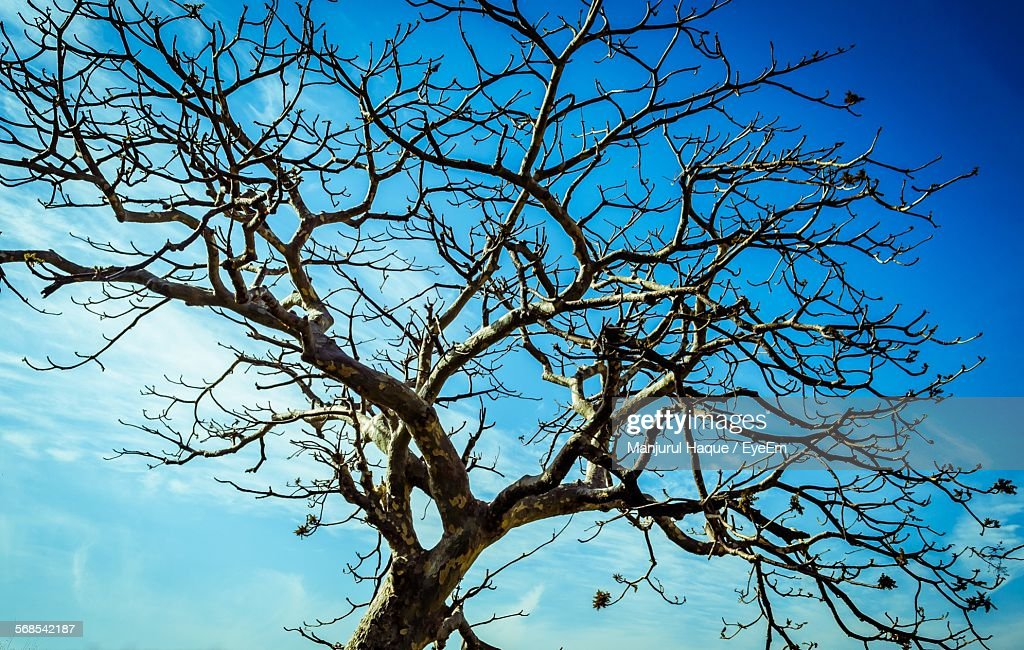 Bare Tree Against Blue Sky : Stock Photo
