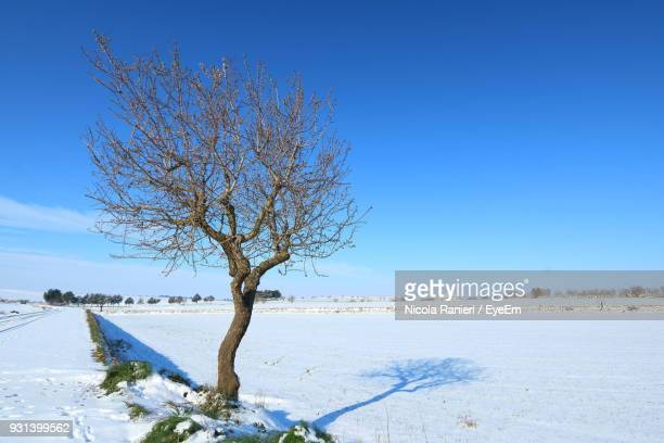 Bare Tree Against Clear Blue Sky During Winter