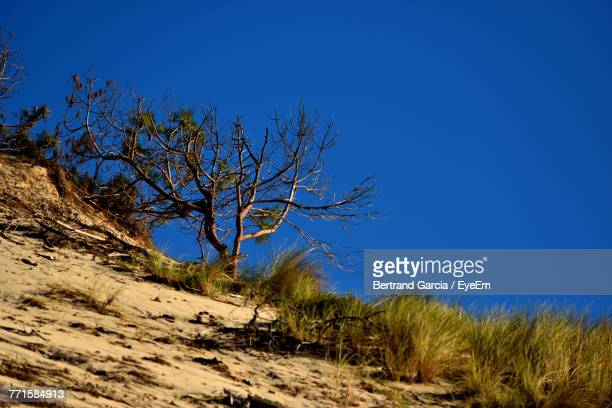 Bare Tree Against Clear Blue Sky
