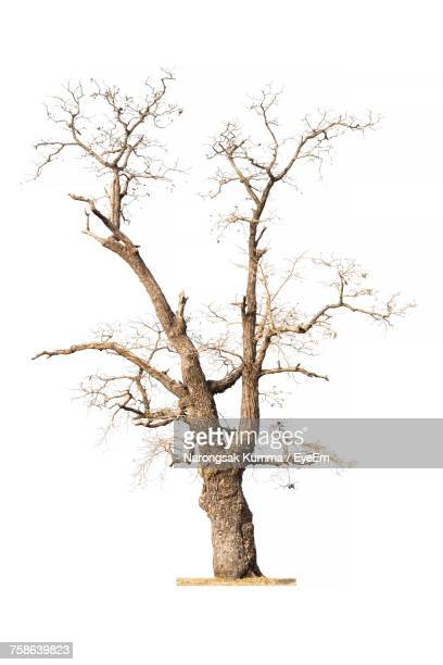 bare tree against clear sky - bare tree stock pictures, royalty-free photos & images