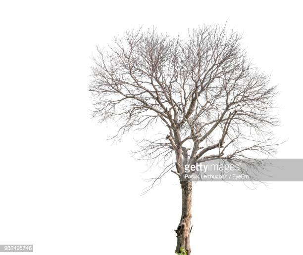 bare tree against clear sky - kahler baum stock-fotos und bilder