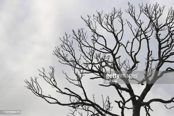 bare tree against cloudy gray sky - ramo parte de uma planta - fotografias e filmes do acervo