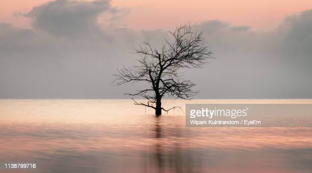 Bare Tree Against Sky During Sunset