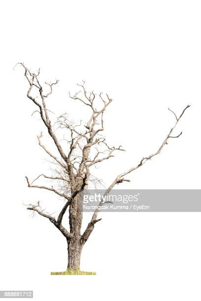 bare tree against white background - bare tree stock pictures, royalty-free photos & images