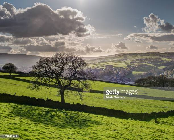 Bare tree and green meadow on slope under cloudy sky with Holmfirth visible, West Yorkshire, England, UK