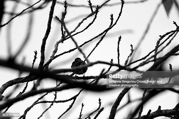 bare tree branches and bird silhouette - gregoria gregoriou crowe fine art and creative photography stock pictures, royalty-free photos & images