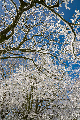 Bare tree branches covered in snow against clear blue sky - gettyimageskorea