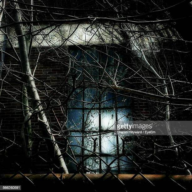 Bare Tree Branches In Front Of Abandoned House Window